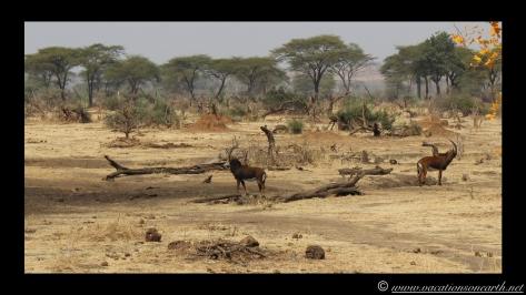 Namibia:Botswana Aug 2013 - Senyati Safari Camp, Chobe, Botswana.006