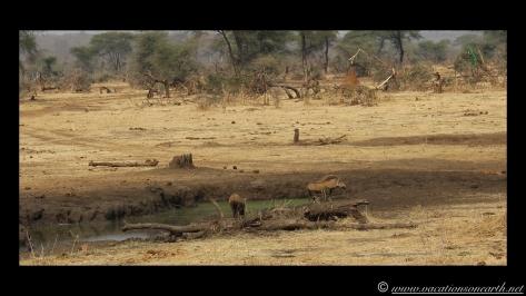 Namibia:Botswana Aug 2013 - Senyati Safari Camp, Chobe, Botswana.007
