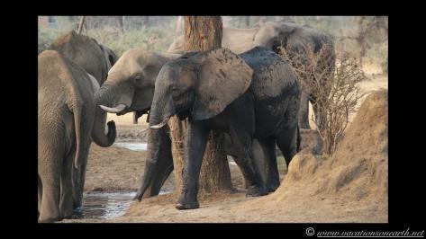 Namibia:Botswana Aug 2013 - Senyati Safari Camp, Chobe, Botswana.008