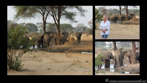 Namibia:Botswana Aug 2013 - Senyati Safari Camp, Chobe, Botswana.009