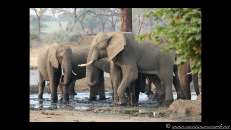 Namibia:Botswana Aug 2013 - Senyati Safari Camp, Chobe, Botswana.011