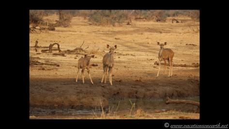 Namibia:Botswana Aug 2013 - Senyati Safari Camp, Chobe, Botswana.012