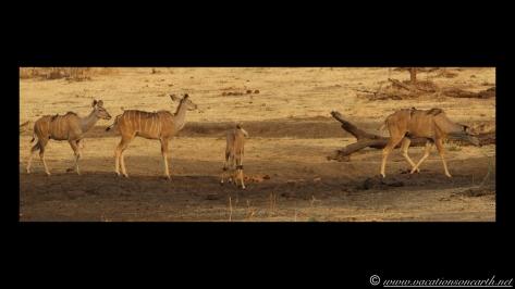 Namibia:Botswana Aug 2013 - Senyati Safari Camp, Chobe, Botswana.013