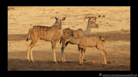 Namibia:Botswana Aug 2013 - Senyati Safari Camp, Chobe, Botswana.014