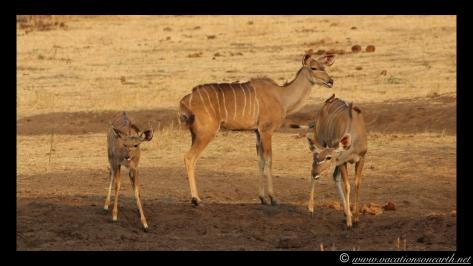 Namibia:Botswana Aug 2013 - Senyati Safari Camp, Chobe, Botswana.015