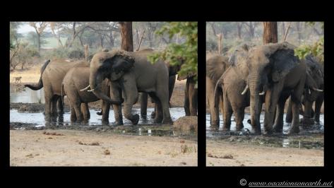 Namibia:Botswana Aug 2013 - Senyati Safari Camp, Chobe, Botswana.016