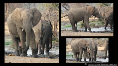 Namibia:Botswana Aug 2013 - Senyati Safari Camp, Chobe, Botswana.017