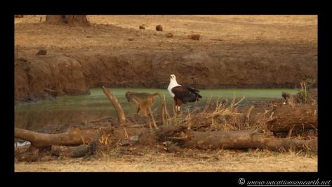 Namibia:Botswana Aug 2013 - Senyati Safari Camp, Chobe, Botswana.019