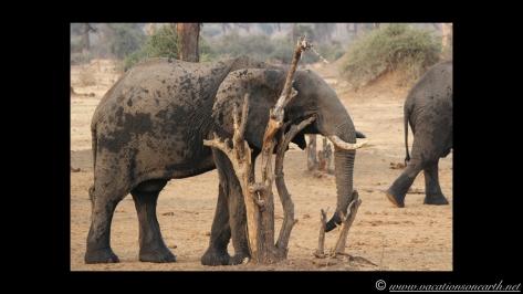 Namibia:Botswana Aug 2013 - Senyati Safari Camp, Chobe, Botswana.020