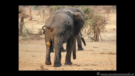 Namibia:Botswana Aug 2013 - Senyati Safari Camp, Chobe, Botswana.021