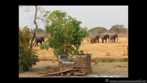Namibia:Botswana Aug 2013 - Senyati Safari Camp, Chobe, Botswana.022