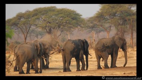 Namibia:Botswana Aug 2013 - Senyati Safari Camp, Chobe, Botswana.023