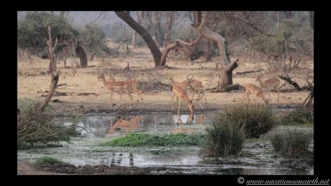 Namibia:Botswana Aug 2013 - Senyati Safari Camp, Chobe, Botswana.024