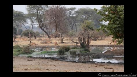 Namibia:Botswana Aug 2013 - Senyati Safari Camp, Chobe, Botswana.026