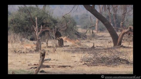 Namibia:Botswana Aug 2013 - Senyati Safari Camp, Chobe, Botswana.027