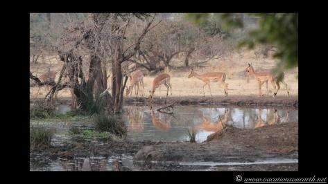 Namibia:Botswana Aug 2013 - Senyati Safari Camp, Chobe, Botswana.028