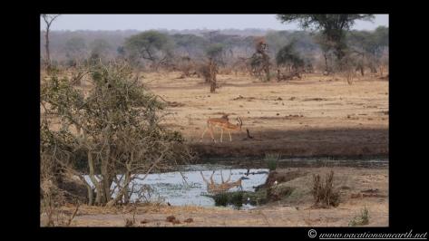 Namibia:Botswana Aug 2013 - Senyati Safari Camp, Chobe, Botswana.029