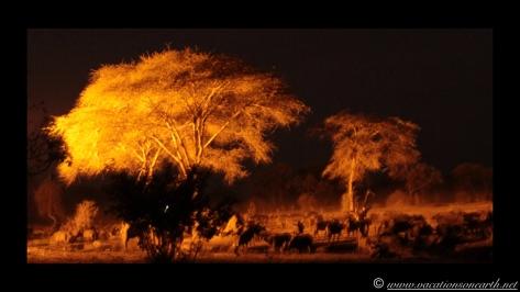 Namibia:Botswana Aug 2013 - Senyati Safari Camp, Chobe, Botswana.031