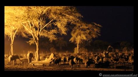 Namibia:Botswana Aug 2013 - Senyati Safari Camp, Chobe, Botswana.032