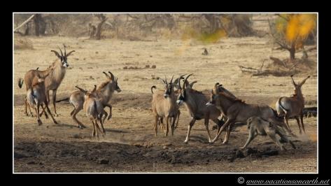 Namibia 2013 - Senyati Safari Camp, Botswana - 15 Aug 2013.002