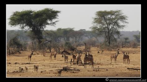 Namibia 2013 - Senyati Safari Camp, Botswana - 15 Aug 2013.003