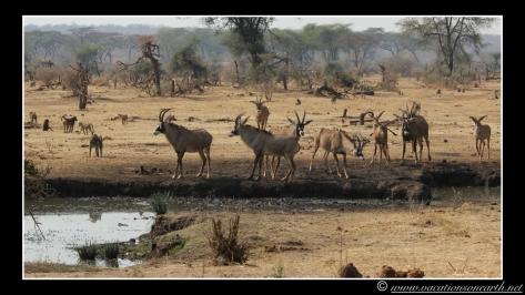 Namibia 2013 - Senyati Safari Camp, Botswana - 15 Aug 2013.004