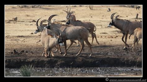 Namibia 2013 - Senyati Safari Camp, Botswana - 15 Aug 2013.005