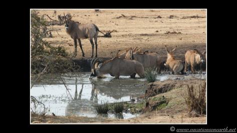 Namibia 2013 - Senyati Safari Camp, Botswana - 15 Aug 2013.006