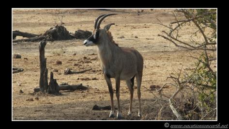 Namibia 2013 - Senyati Safari Camp, Botswana - 15 Aug 2013.008