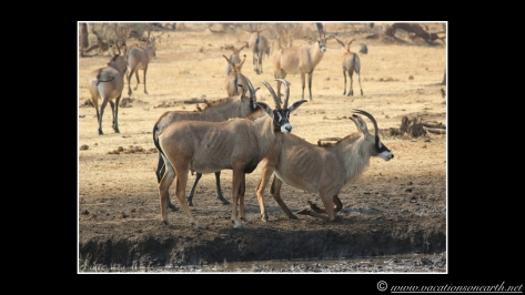 Namibia 2013 - Senyati Safari Camp, Botswana - 15 Aug 2013.011