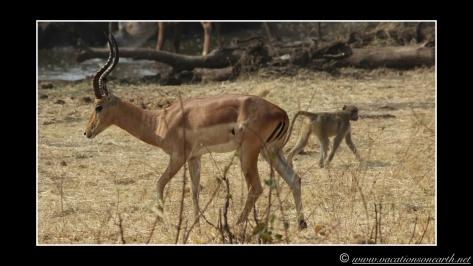 Namibia 2013 - Senyati Safari Camp, Botswana - 15 Aug 2013.012