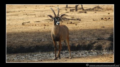 Namibia 2013 - Senyati Safari Camp, Botswana - 15 Aug 2013.013