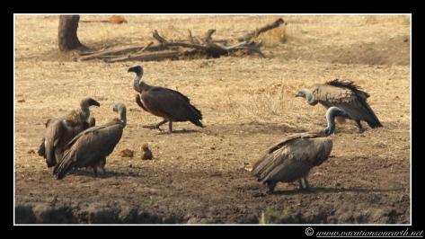 Namibia 2013 - Senyati Safari Camp, Botswana - 15 Aug 2013.014