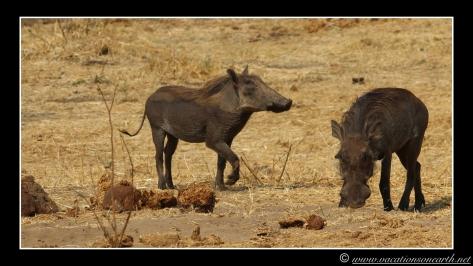 Namibia 2013 - Senyati Safari Camp, Botswana - 15 Aug 2013.015