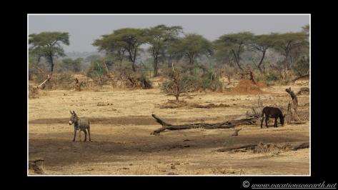 Namibia 2013 - Senyati Safari Camp, Botswana - 15 Aug 2013.016