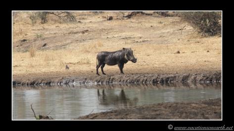 Namibia 2013 - Senyati Safari Camp, Botswana - 15 Aug 2013.017
