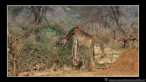 Namibia 2013 - Senyati Safari Camp, Botswana - 15 Aug 2013.018