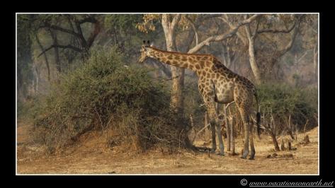 Namibia 2013 - Senyati Safari Camp, Botswana - 15 Aug 2013.020