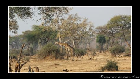 Namibia 2013 - Senyati Safari Camp, Botswana - 15 Aug 2013.021