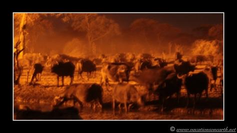 Namibia 2013 - Senyati Safari Camp, Botswana - 15 Aug 2013.023