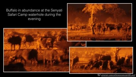 Namibia 2013 - Senyati Safari Camp, Botswana - 15 Aug 2013.024