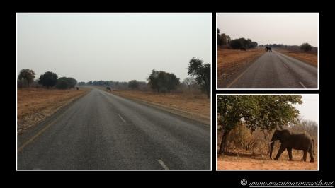 Namibia 2013 - Senyati Safari Camp, Botswana - 15 Aug 2013.025
