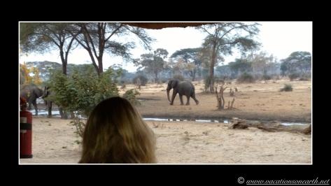 Namibia 2013 - Senyati Safari Camp, Botswana - 15 Aug 2013.028
