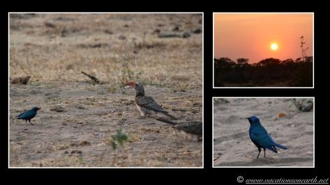 Namibia 2013 - Senyati Safari Camp, Botswana - 16 Aug 2013.010