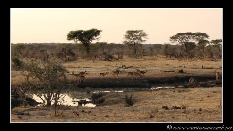 Namibia 2013 - Senyati Safari Camp, Botswana - 16 Aug 2013.012
