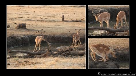 Namibia 2013 - Senyati Safari Camp, Botswana - 16 Aug 2013.013