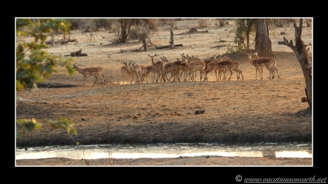 Namibia 2013 - Senyati Safari Camp, Botswana - 16 Aug 2013.014