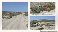 South Africa West Coast - Drive from Houthoop through the Namaqua and Skilpad National Park towards Cape Town.013