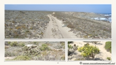 South Africa West Coast - Drive from Houthoop through the Namaqua and Skilpad National Park towards Cape Town.018