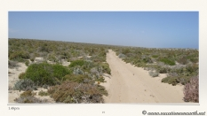 South Africa West Coast - Drive from Houthoop through the Namaqua and Skilpad National Park towards Cape Town.019